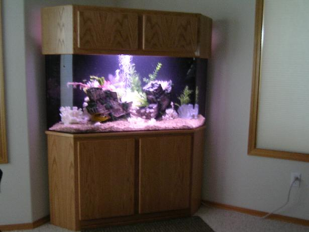 Glass habitats aquariums for Corner fish tank for sale