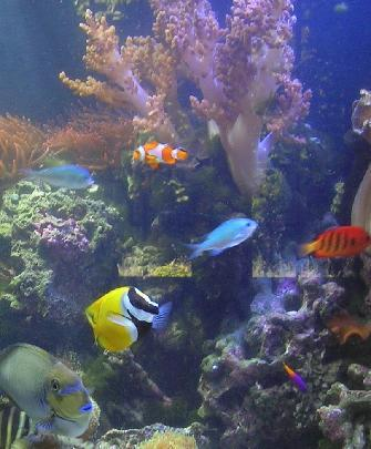 Aquarium Design Installation And Maintenence Services
